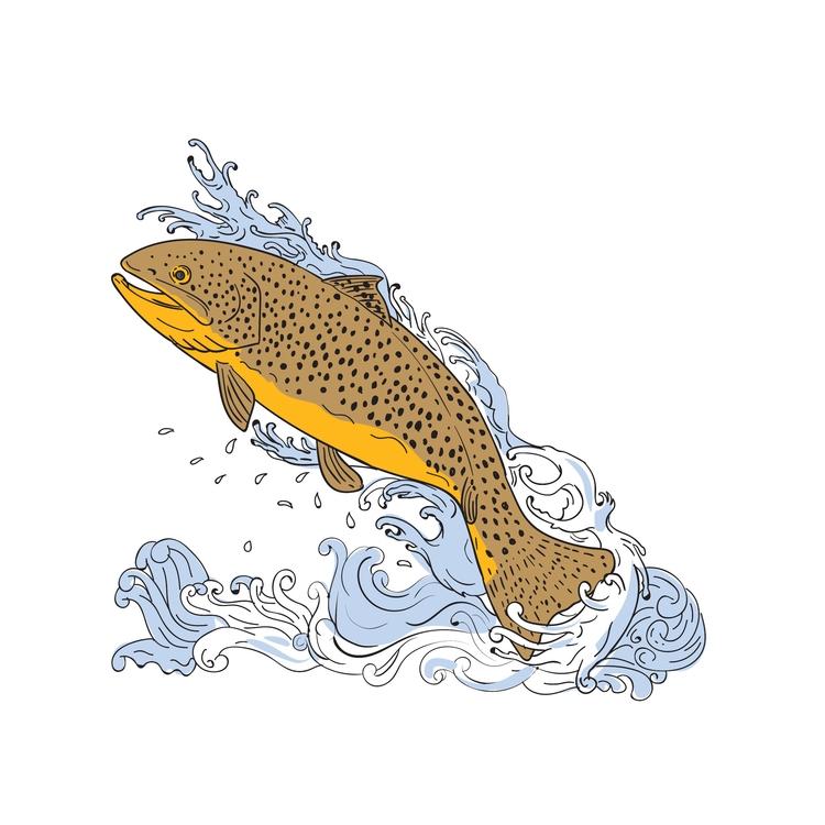 Brown Water - Trout, Swimming, Turbulent - patrimonio | ello