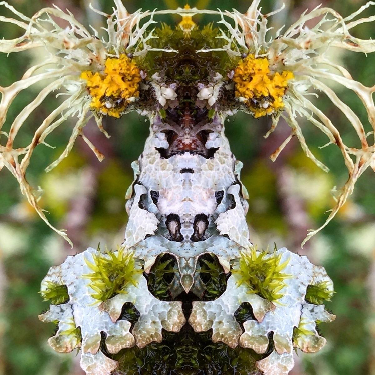 fungi, moss, lichen, getcloser - trillianmann | ello
