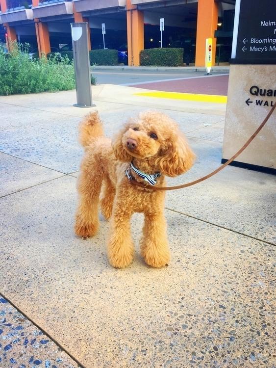 Cute Dog Palo Alto - modulomari | ello