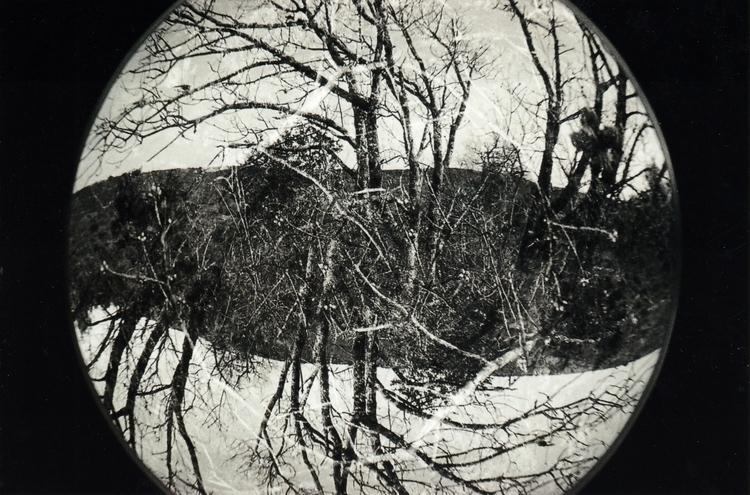 Trees mm - 2, fisheye, photo, photography - acidecabine   ello