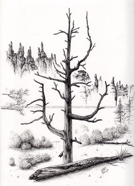 Bryce Canyon Tree - art, drawing - msoart | ello