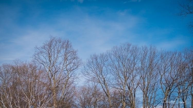 Blustering Cold | [Ello](http - trees - photografia | ello