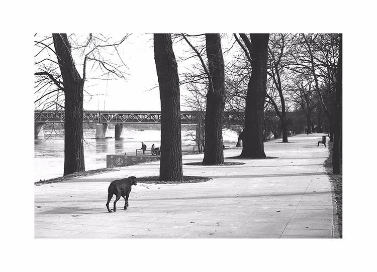 doggy - warsaw, river, park, dog - richvein   ello