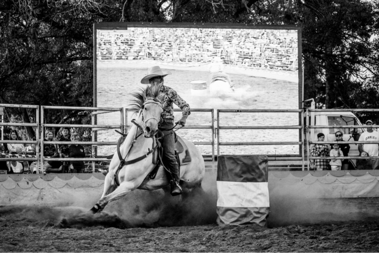horse, rodeo, blackandwhite, lightroom - agrabah | ello