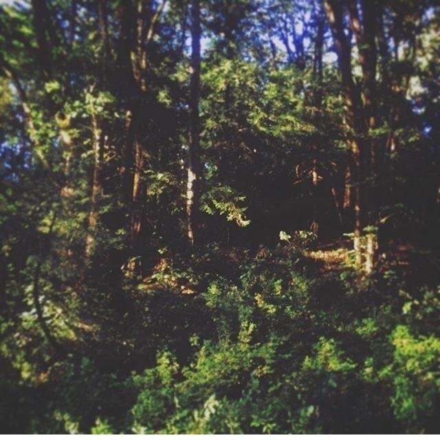 Lounging Elementals - ursa_janeen | ello