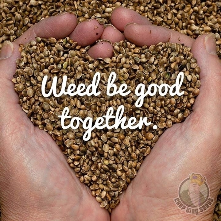 grow medicine - cropkingseeds, cannabis - cropkingseeds | ello