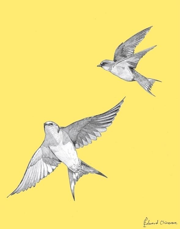 Year 35 Day 5: Barn Swallows Pe - mydiagonallife | ello