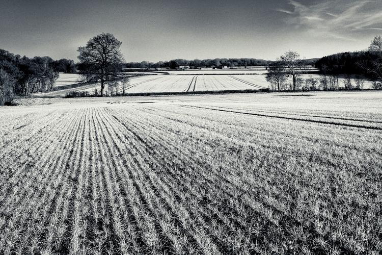 series Lines countryside - ellophotography - toni_ertl | ello