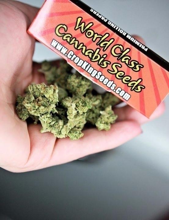 Grow - cropkingseeds, cannabis, seeds - cropkingseeds   ello