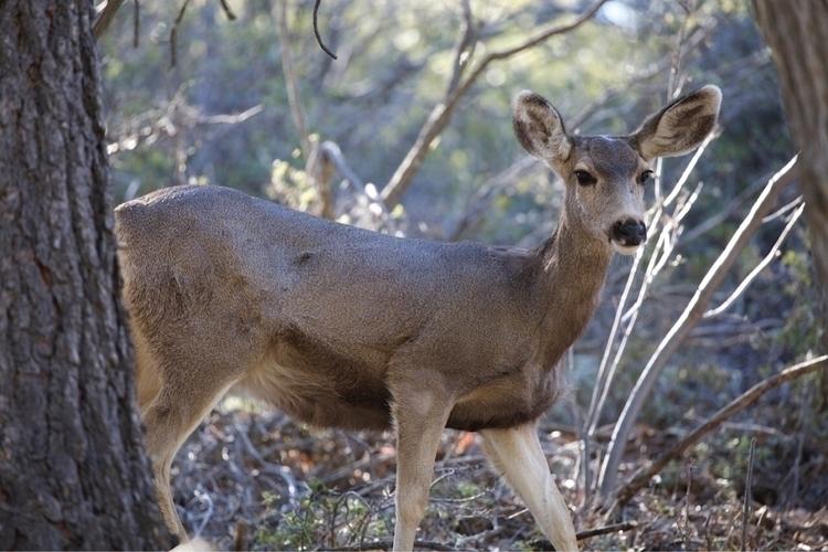 full wildlife . tail butt big - deer - bamps | ello