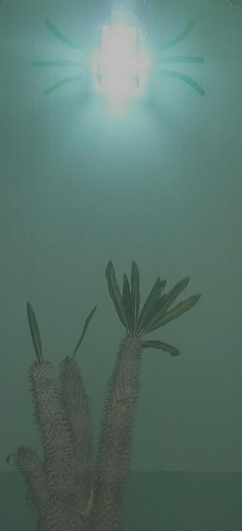 Badass, Rooftop, Cactus - dienay | ello