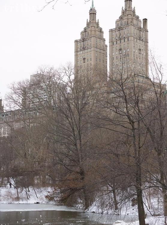 desolately cold Central Park, Y - trilbyt | ello