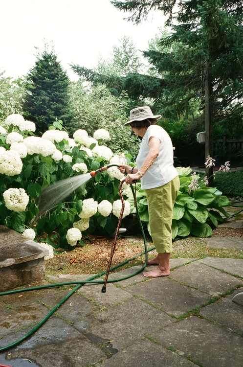Oma watering hydrangeas summers - susannahvanderzaag | ello