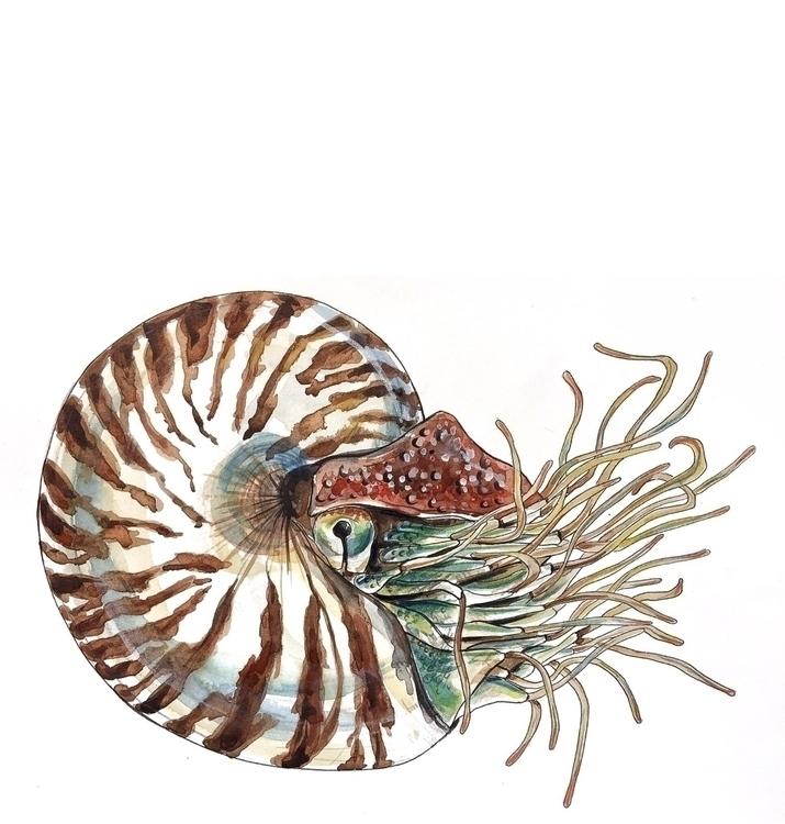 nautilus, shell, nautical, drawing - aliellydesign | ello
