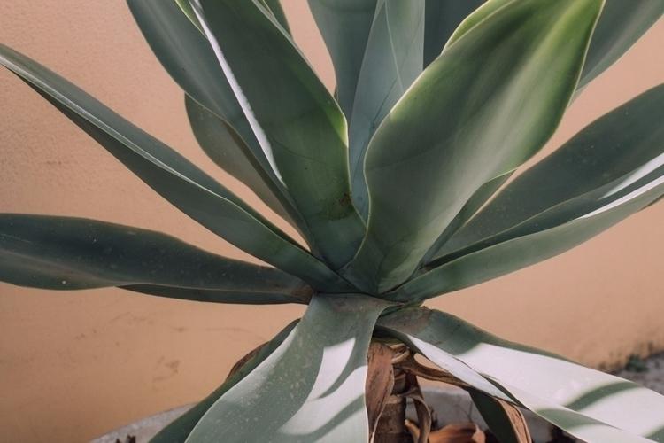 succulents - mariagnezd | ello