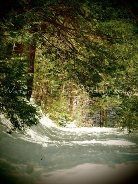 people remaining wilderness des - natureisfree | ello