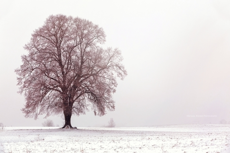 winter, scenery, winterimpressions - michael-rieder-photography | ello