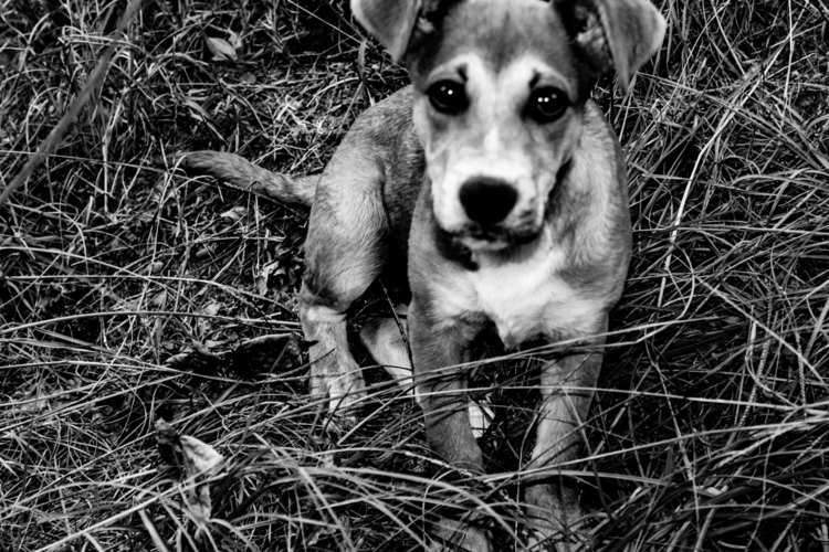 Puppy eyes - puppyeyes, blackandwhiteohotpgraphy - saywhahnah   ello