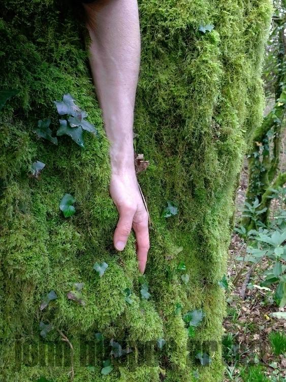 LOWEST TREE*** artwork moi. par - johnhopper | ello