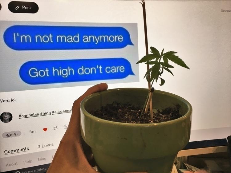 cannabis, ellocannabis, 420, leaf - ellocannabis | ello