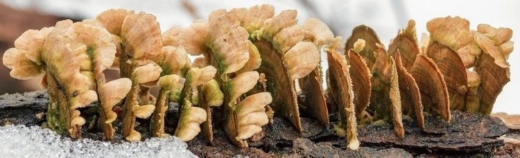 lineup  - fungus, stump, textures - docdenny | ello