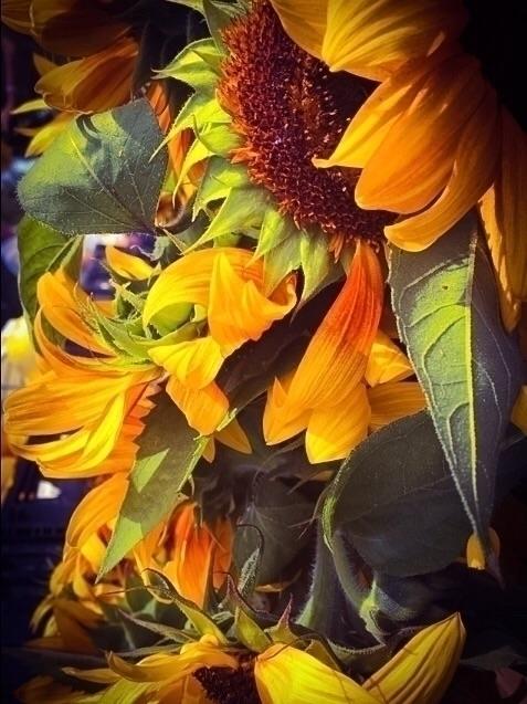 Bouquet Summer - exinerartstudio   ello