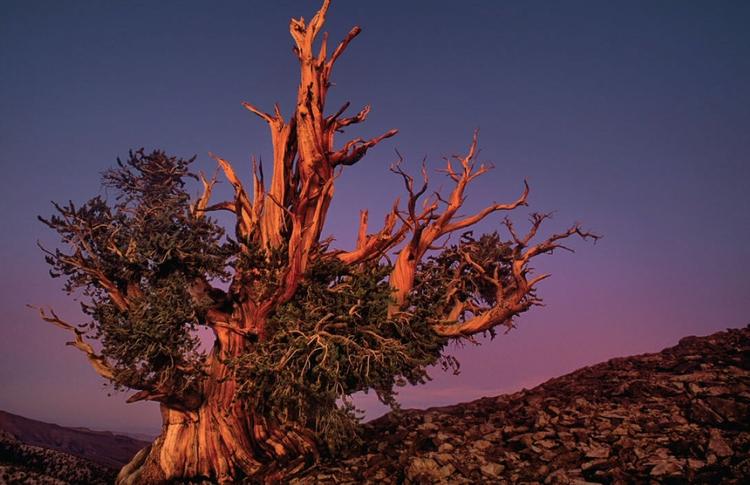 nature, light, tree - davisco | ello