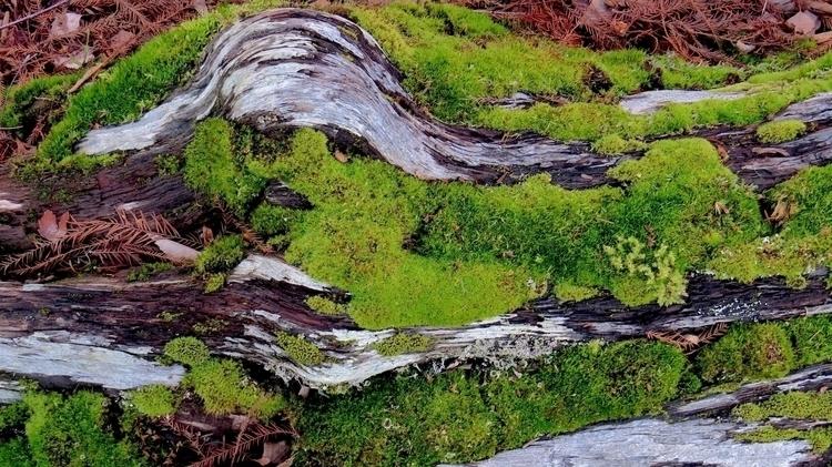 Moss, mold, mildew, fungus, lic - dave63 | ello
