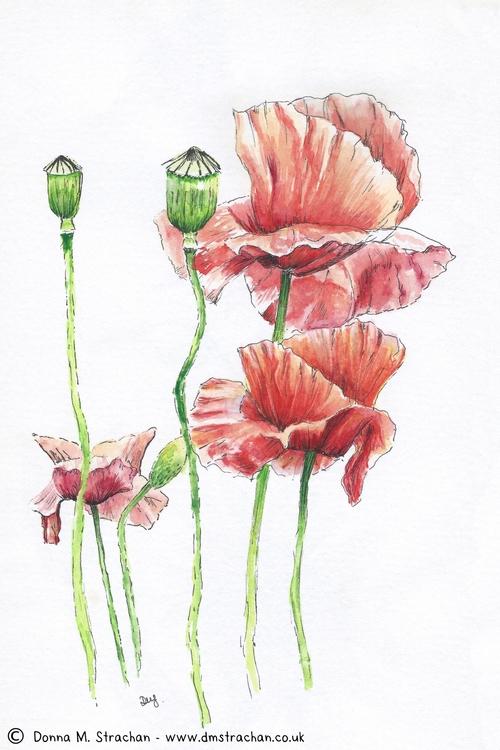 poppy sketches - A5 pen ink wat - donnamstrachan | ello