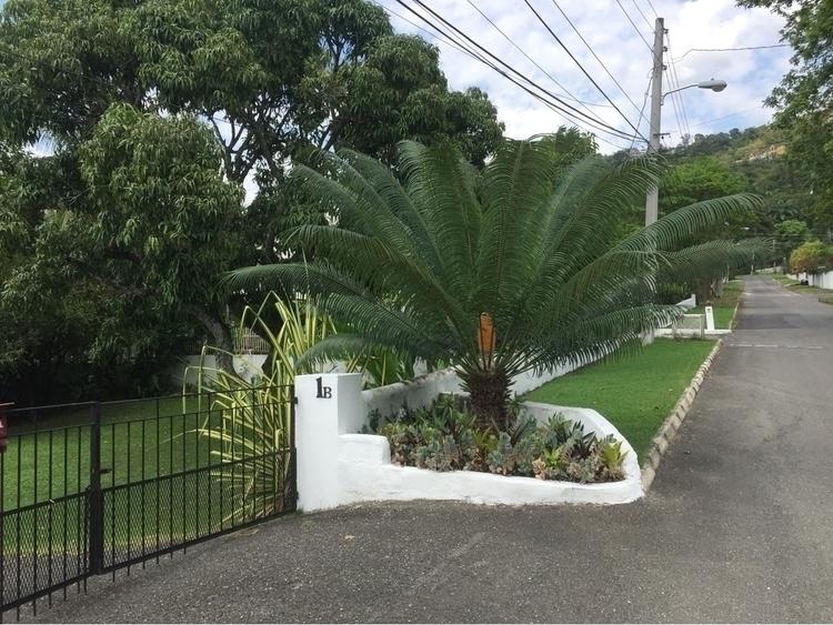 lovely walk hill plant - Jamaica - inmyownwords   ello