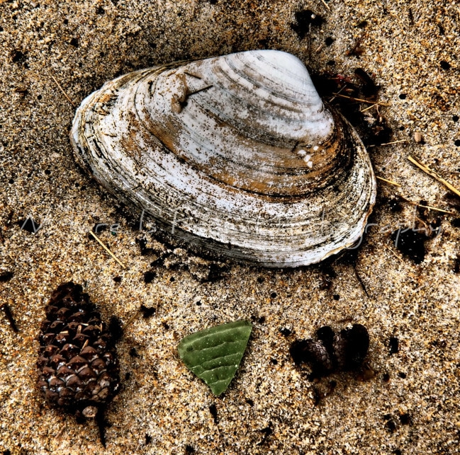 Ocean Treasures - ocean, seashell - natureisfree | ello