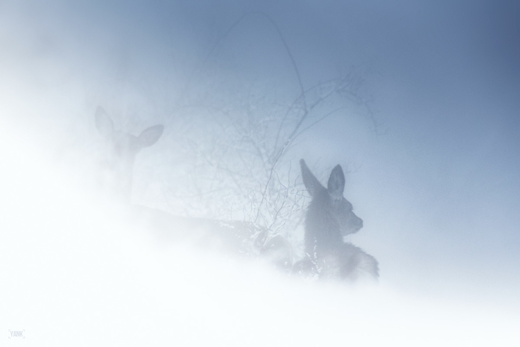 Poetic winter - wildlife, alps, snow - yank- | ello