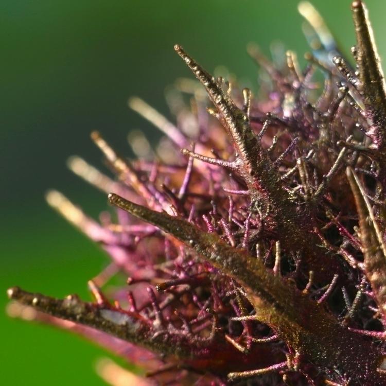Space Flower. Macro - nature, forest - ipomoea_purpurea | ello