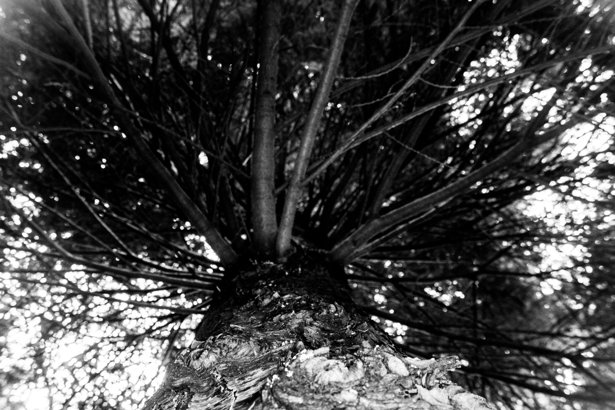 Litterfall creek, pine forest f - dropshot | ello
