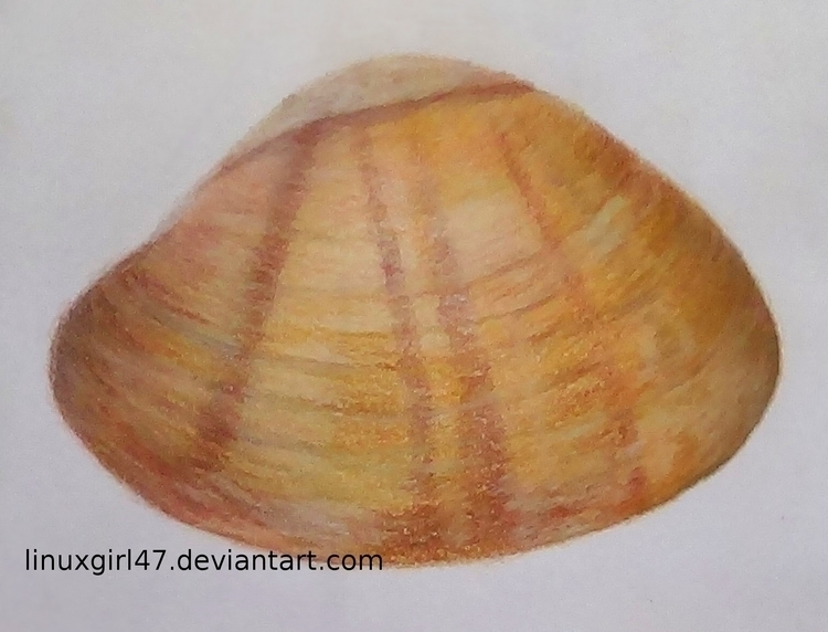Seashell - traditionalart, seashell - linuxgirl | ello