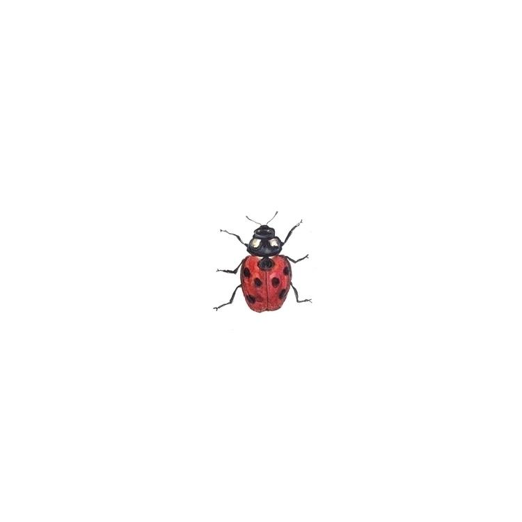 ladybird, colour, drawing, painting - aliellydesign | ello