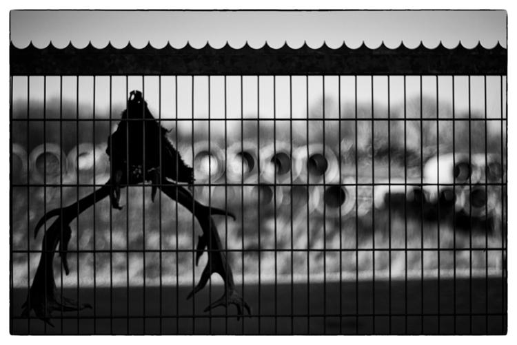 Fragment - SomeSortOfLandscapePhotography - sselvejer | ello