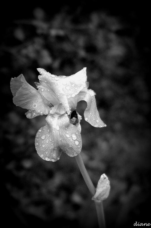 flower, natureisbeautiful - aspi-diane | ello