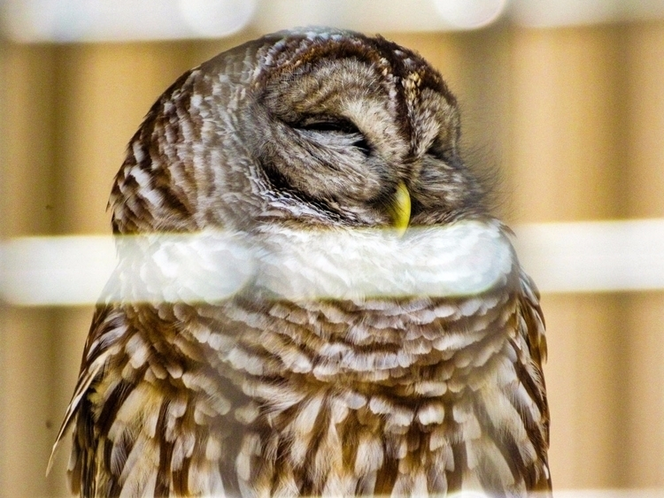 Brukner Nature Center, Troy Ohi - kagejohnson | ello