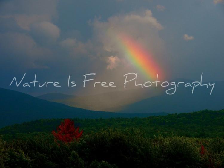 rainbow Bluebirds fly dreams dr - natureisfree | ello