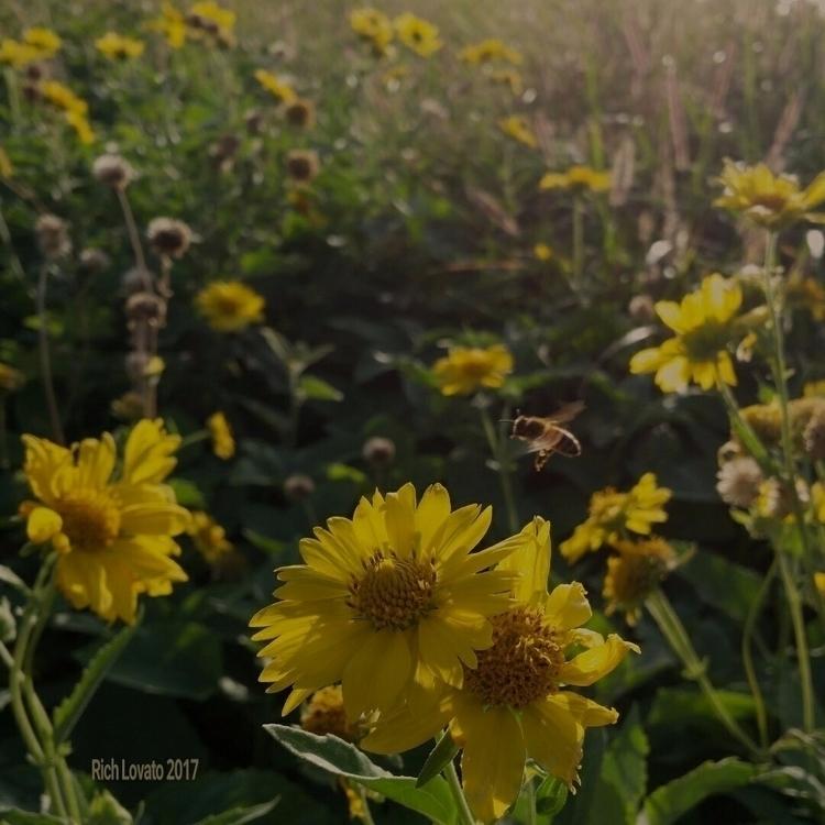 Spring - sun, battle, fun, smile - richlovato | ello