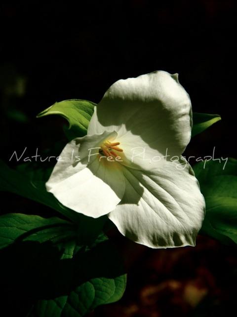 find universal elements air wat - natureisfree | ello