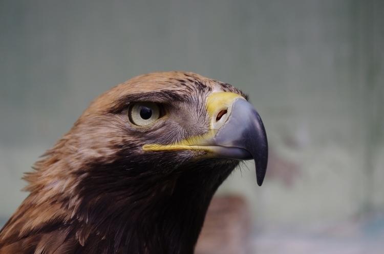 Eagle - sologub | ello