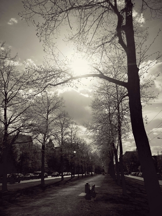 April - spring, alley, dresden, city - claudio_g_c | ello