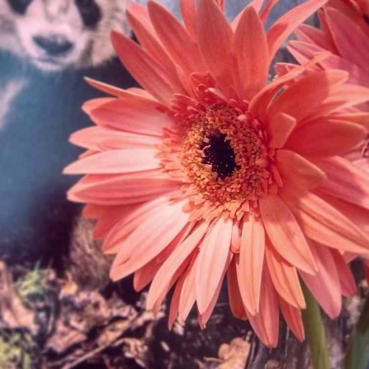 flower, pink, panda, photography - renanferreira | ello