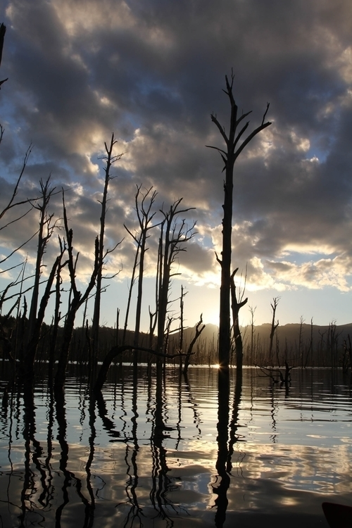 Flooded forest. Boyes Basin - Tasmania - b_goat | ello