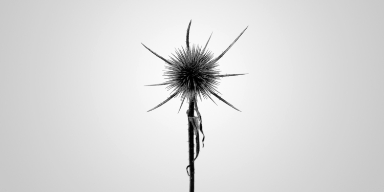 teasel flickr gallery - photography - salz | ello