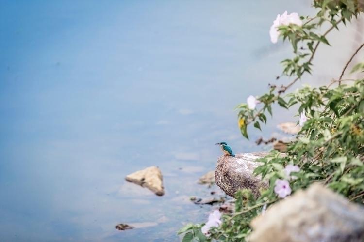 breakfast, bird, female, kingfisher - madebyakhil   ello