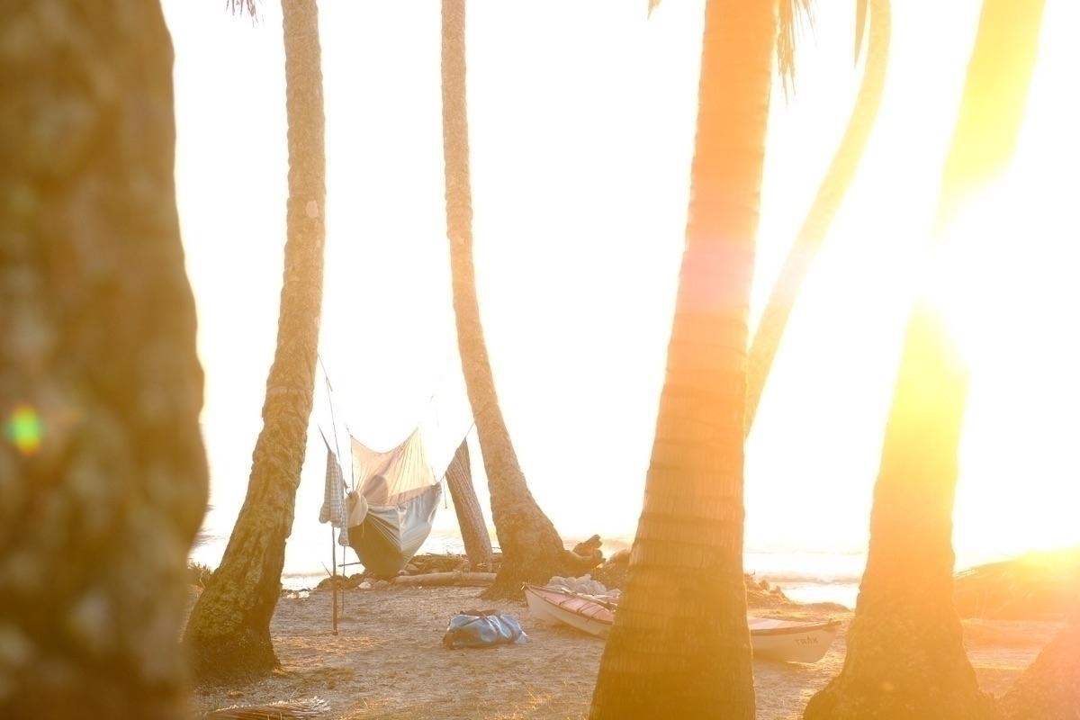 House coconut forest - tropical - bradengunem | ello