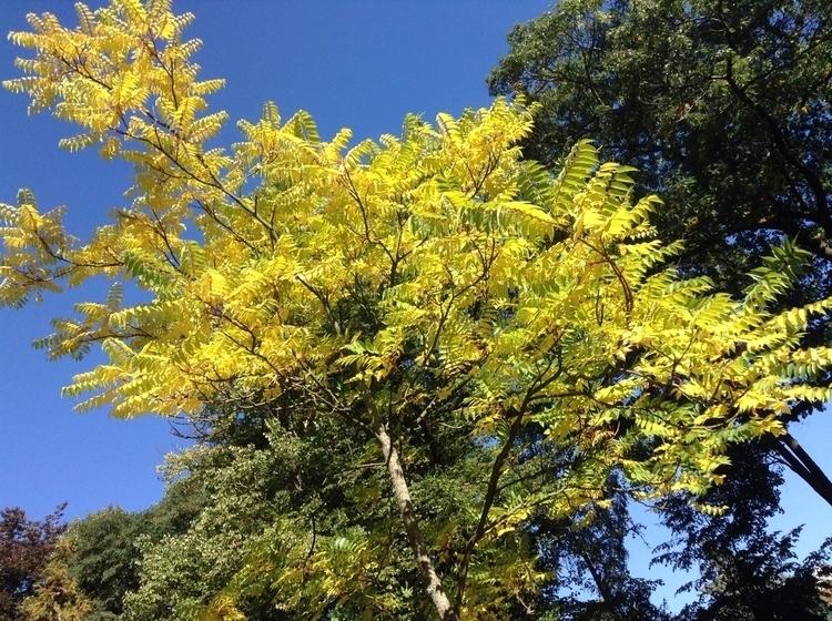 autumn - nataschab | ello